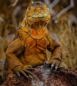 summer skin rejuvenation lizard